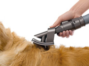 Pet groom tool